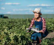 ERP no agronegócio: entenda sua importância para gestão excelente