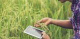 Agronegócio e Pós-Pandemia: tecnologia pode ser uma grande aliada